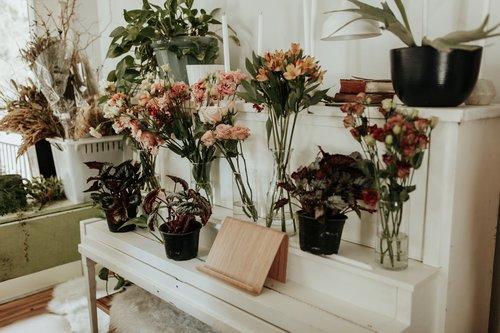 an austin florist's shop of flowers in vases